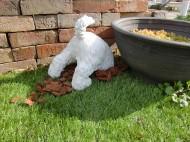 テリア 穴掘り犬