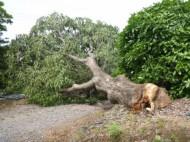 台風被害4