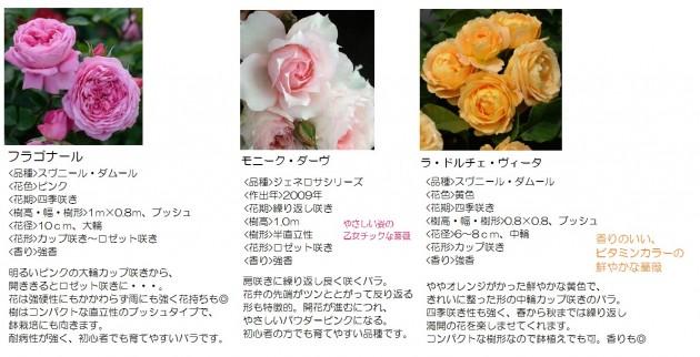 鉢や庭で育てる大きくなり過ぎないバラ2