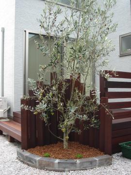オリーブ植栽画像