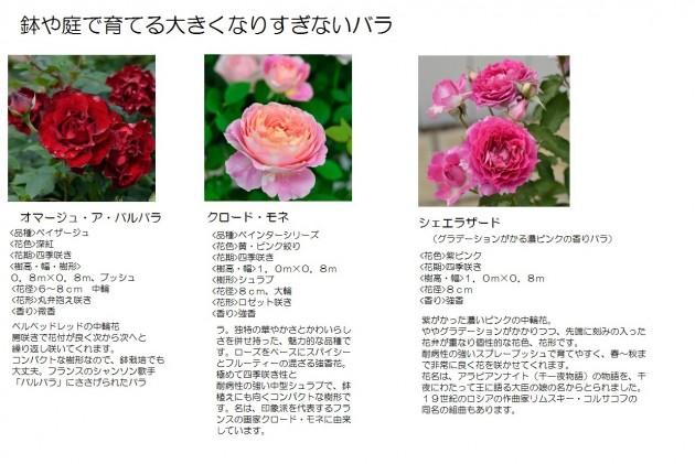 鉢や庭で育てる大きくなりすぎないバラ