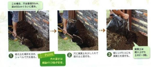 植え込み位置を決め穴を掘る