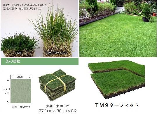 トヨタ人工芝TM9画像