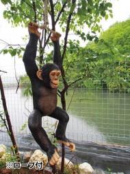 ぶら下がりチンパンジー