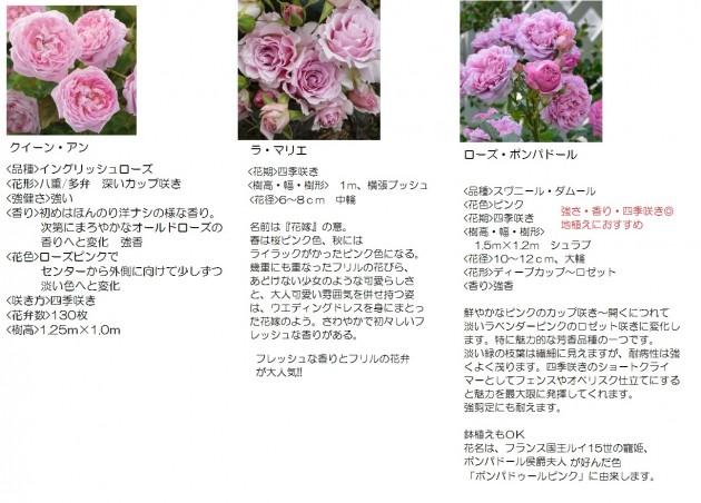 鉢や庭で育てる大きくなり過ぎないバラ3