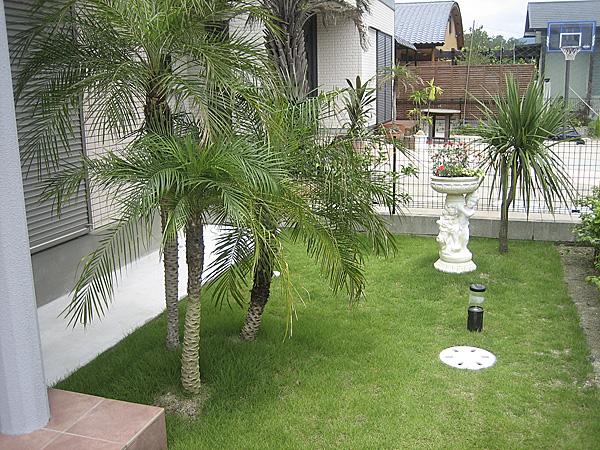 芝生と植物